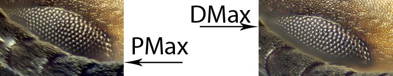 DMax-PMax