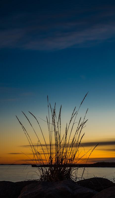 Siv i solnedgang