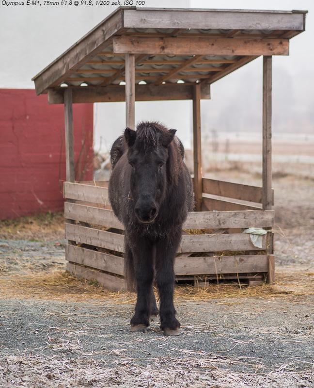 Hest eller ponny